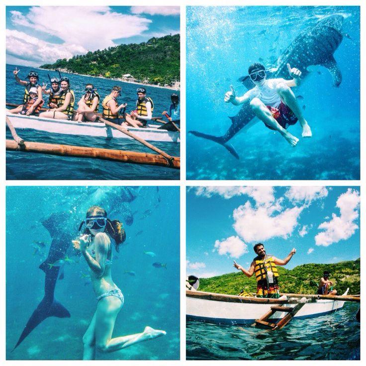Обучение на Филиппинах - это не только возможность подтянуть ваш английский, но и шанс побывать на уникальных экскурсиях. Так на выходных наши студенты отправились в г. Ослоб плавать с китовыми акулами! Китовые акулы — это самые большие акулы и самые большие рыбы в мире. Длина может достигать 18 метров, но обычно длина взрослой акулы около 10-12 метров. Питаются они планктоном, большую часть времени проводят у поверхности воды и плавают очень медленно, зачастую не более 5 км/ч.