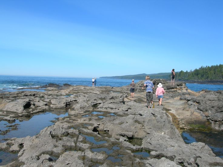 Botanical Beach, just one of the magical spots to witness on the Pacific Marine Circle Route.