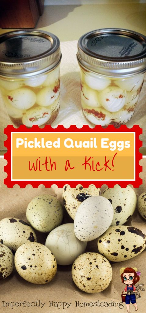 Pickled Quail Eggs with a Kick - Quick and Yummy. A delicious and nutritious snack!
