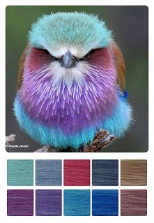 ColourSpun: ColourSpun Colourways - Lilac Breasted Roller
