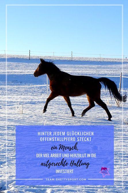 Ein Offenstall macht Arbeit, kostet Zeit und Geld - gerade im Winter. Warum das so ist? Das erfährst Du auf dem Blog! #offenstall #artgerechtepferdehaltung #pferdehaltung #paddocktrail #offenstallideen #pferdestall #winter #paddockbefestigung #selbsttränken #beheiztetränken #reitplatzbeleuchtung #pferdetraining #pferdespruch