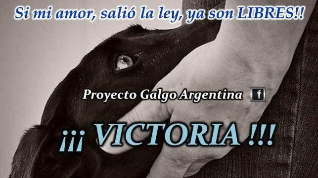 Victoria!! - Ya es LEY la prohibición de carreras de galgos en todo el territorio argentino!!!