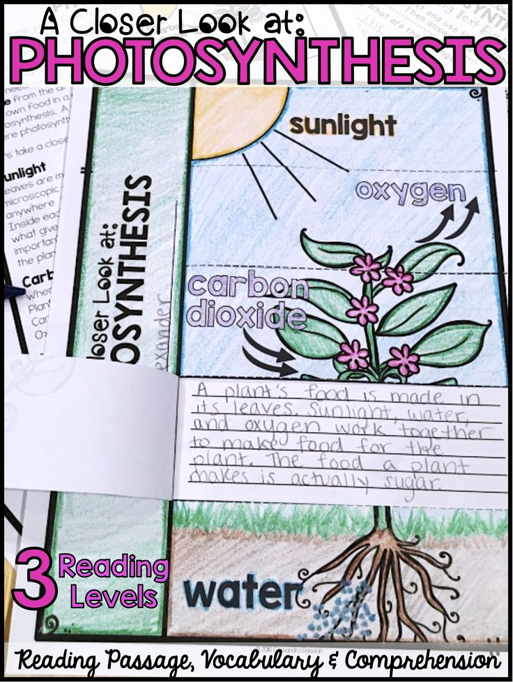 Differentiated Reading Passages, Vocabulary & Comprehension. Everything you need to teach your students about photosynthesis!