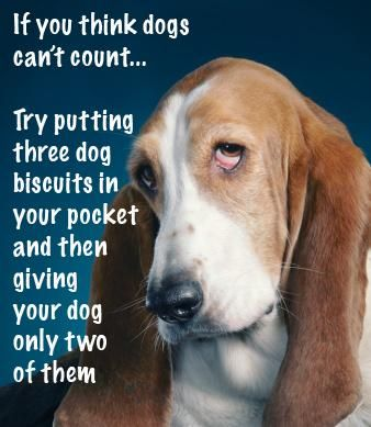 Who ever says dogs aren't clever has obviously never had one of their own!
