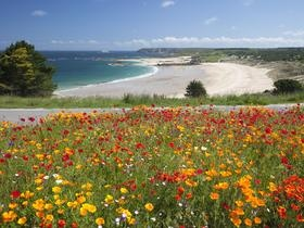 Dorset England - sea and flowers - a wonderful sight!Wild Flower, Riviera, Favorite Places, Pleherel Beach, Beautiful, Colors Nature, Brittany France, Cote D Armors, Seashore Wallpapers