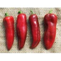 Malawi Paprika