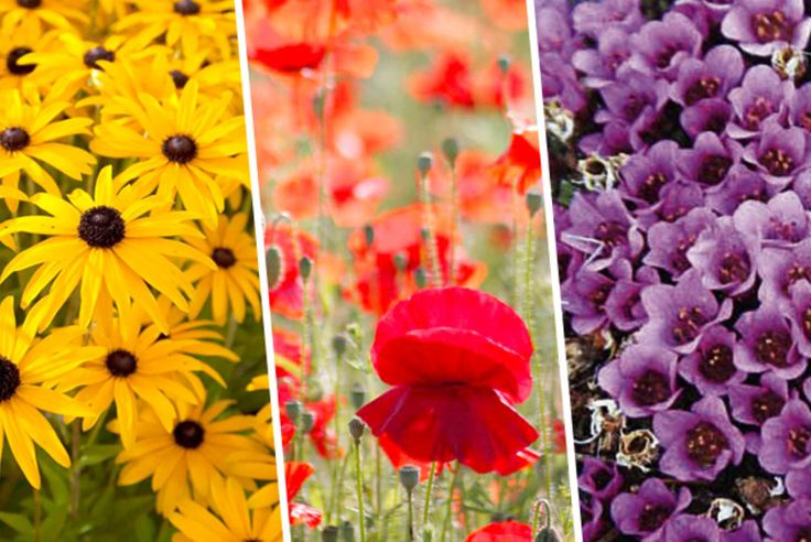 144x Perennial Plants Flowers can be so inspirational :)