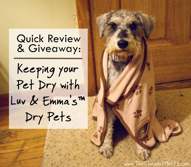 Quick Review & Giveaway: Keeping your Pet Dry with Luv & Emma's™ Dry Pets #Sponsored