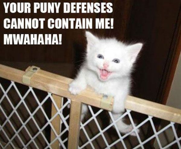 Trying to build a cat gate that actually works right now, and so far, this is the same reaction my cat is giving me...