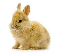Afbeeldingsresultaat voor konijnen