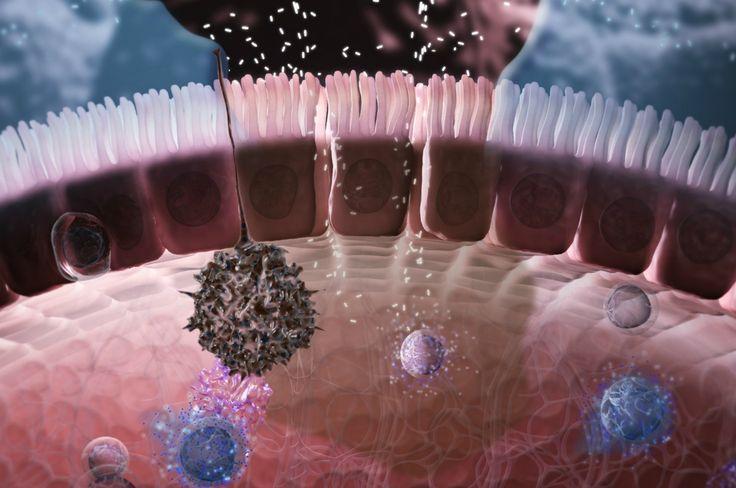 barrera primaria epitelio mucociliar