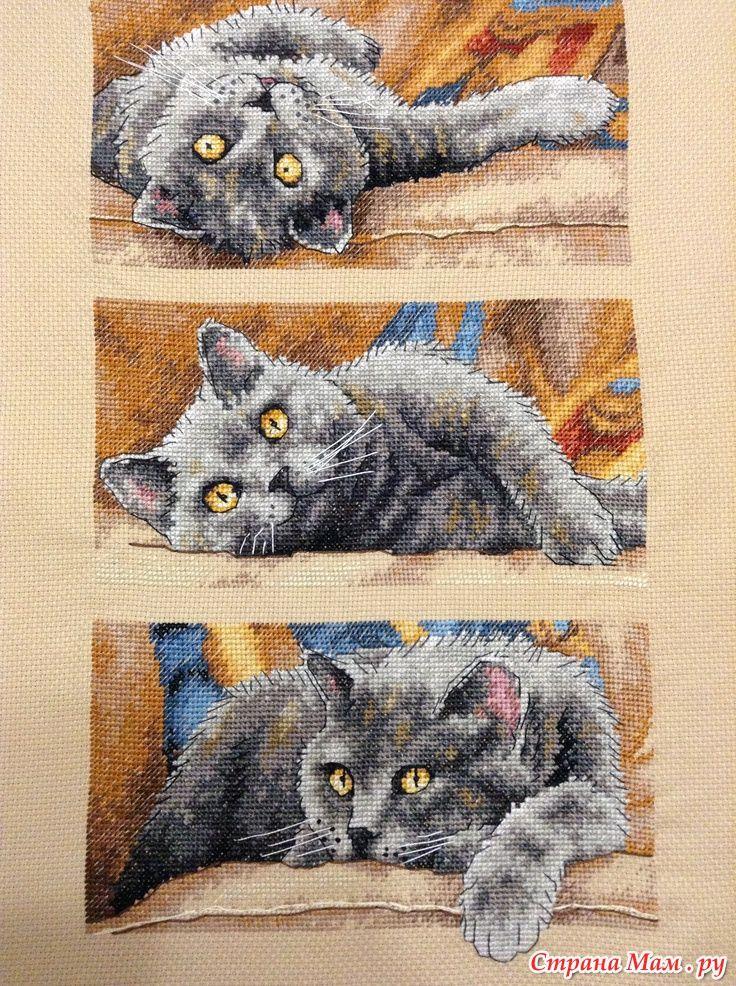 💥 Для любителей котиков 😻 очаровательная вышивка Dimensions 35301 Кот Макс! Оригинал стоит больше 💸 2000 руб.!, у нас как всегда БЕСПЛАТНО 👉 http://stitchlike.ru/5gp6👍    #коты #котики #вышивка #схемавышивки #поделки #своимируками #handmade #хендмейд #stitchlike_dimensions  📌Незабудьте сохранить к себе!