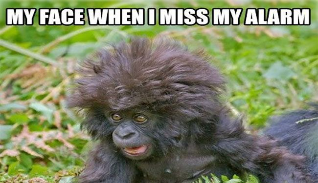 15 Hilarious Monkey Memes To Brighten Your Day