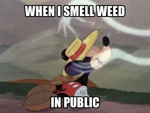 when I smell weed in public http://thestateofweed.com/funny-weed-pictures/