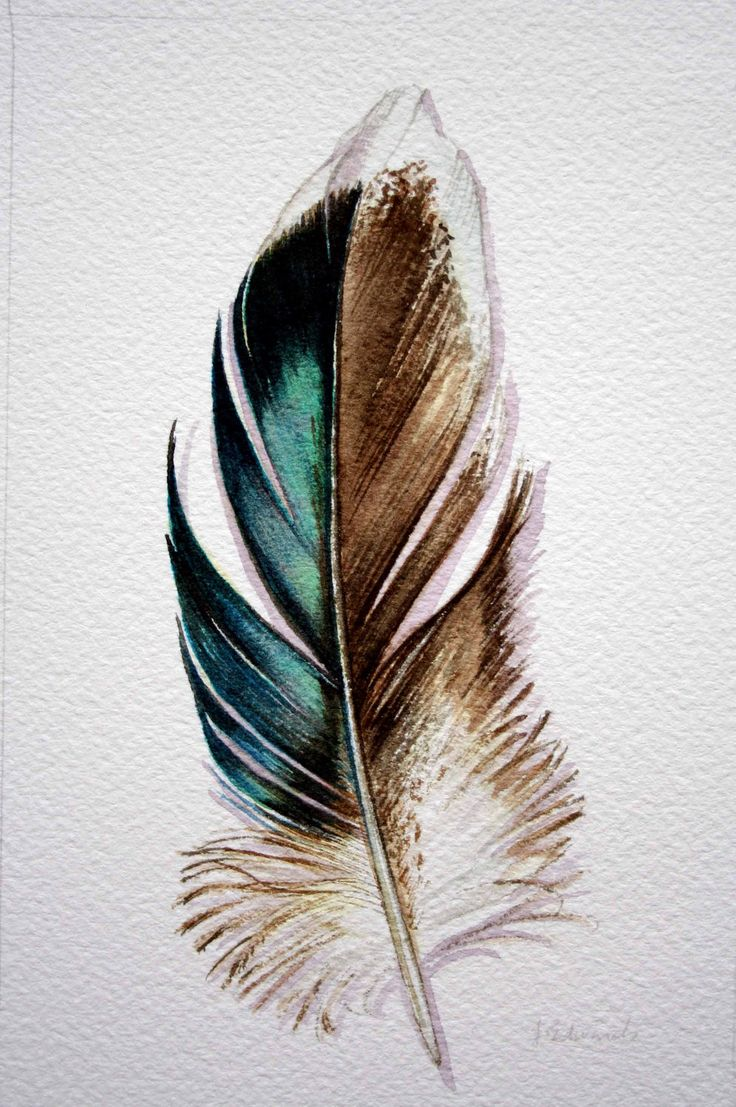 mallard feather....if I got a feather it would be a specific bird...not like a black and grey one