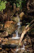 Vann, Creek, Fossen, Naturlig, Regnskog