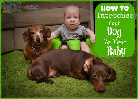 Before you bring a new baby into your home, read these ten great tips for helping introduce your baby to your dog!
