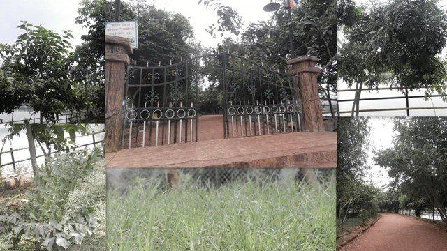 Newly developed garden using native trees and grasses along the lake near Katraj