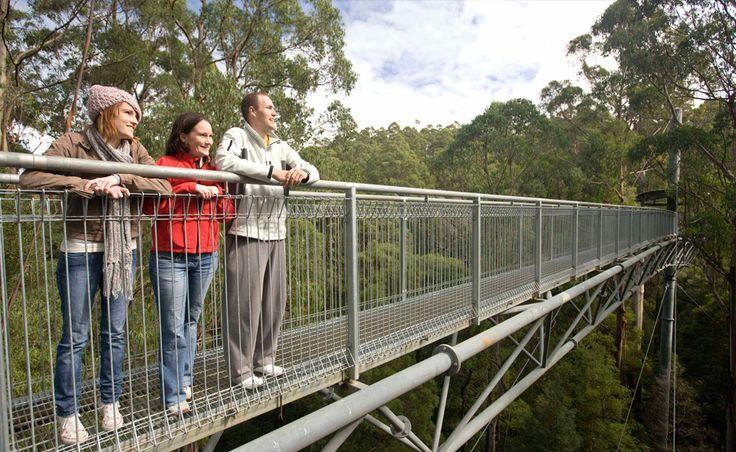 Otway Fly Treetop Adventures - Great Ocean Road, Victoria, Australia