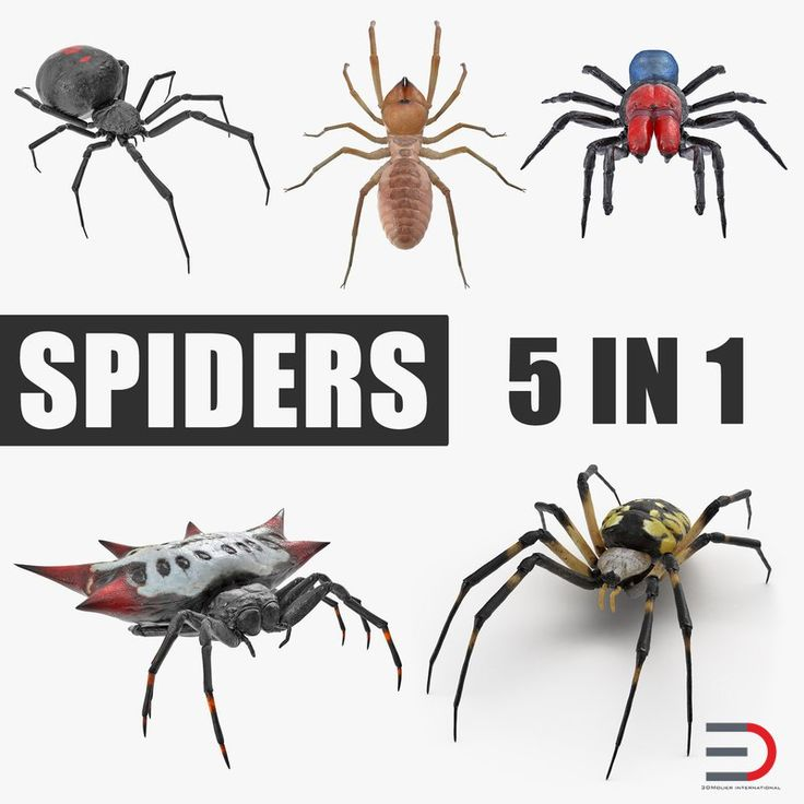 Spiders Collection 3D models