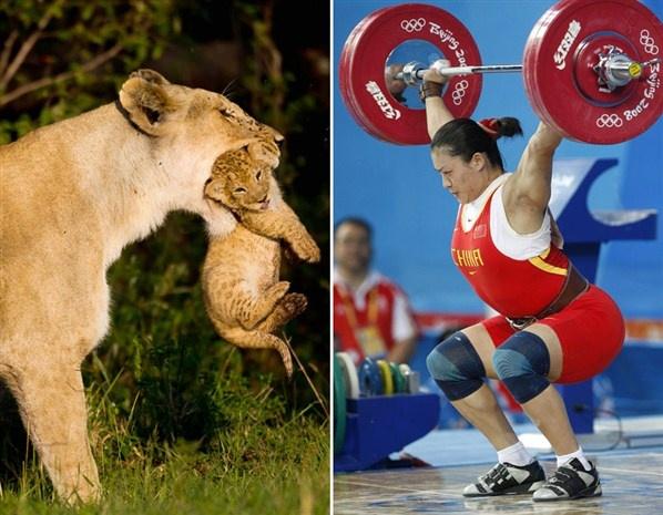 Animales y olímpicos: Levantamiento de pesas <3