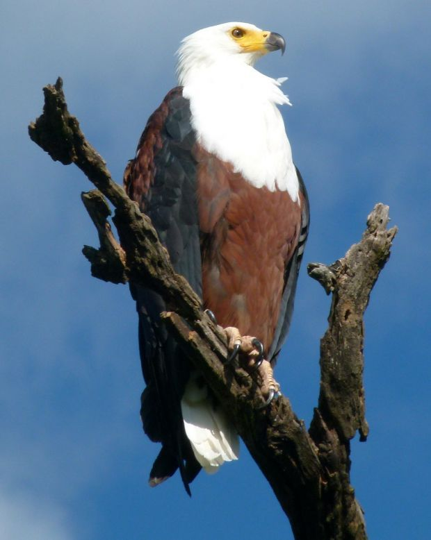 Love South Africa goes birding – Blog – South African Tourism