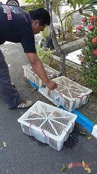 Polres Jembrana Amankan 13 Ekor Anak Anjing - http://denpostnews.com/2016/01/19/polres-jembrana-amankan-13-ekor-anak-anjing/