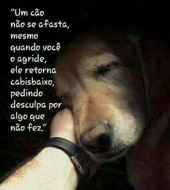 PURA VERDADE ❤AMO MEUS PETS!!!