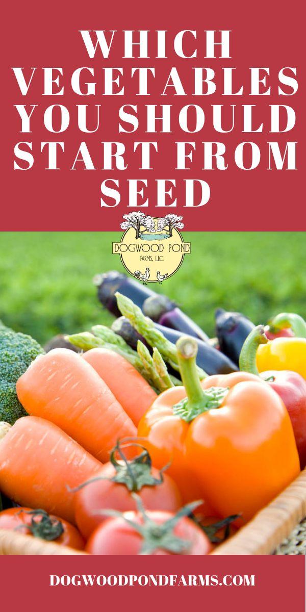 Einfacher Start von Gemüsesamen: Top 12 Gemüsesorten