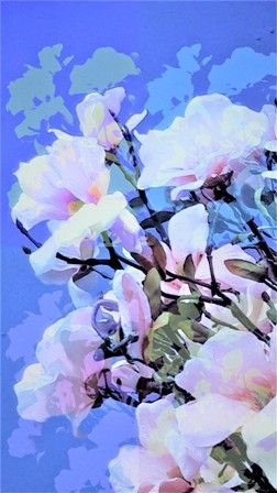 #kunstfotografie #bloemen #magnolia #abstract