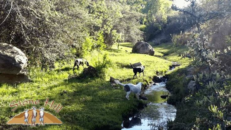 Stone Hill Pet Friendly Cottages Magaliesburg