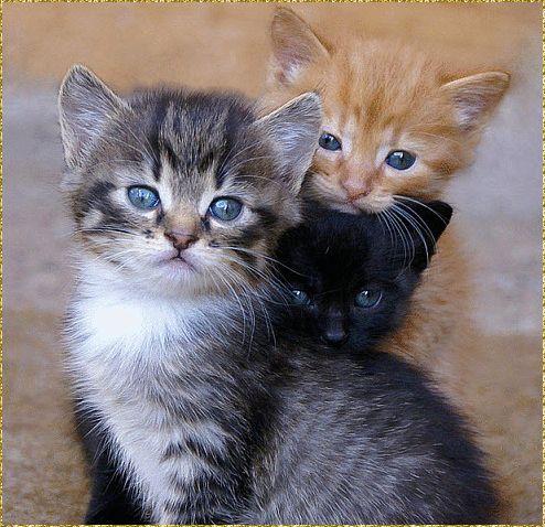 dreamies.de (h9hmg9wnb33.gif) Katzen, Baby katzen