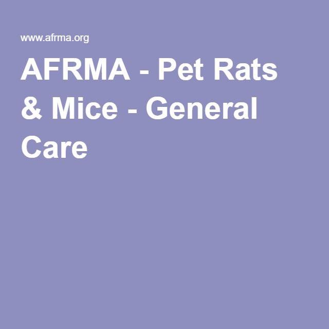 AFRMA - Pet Rats & Mice - General Care
