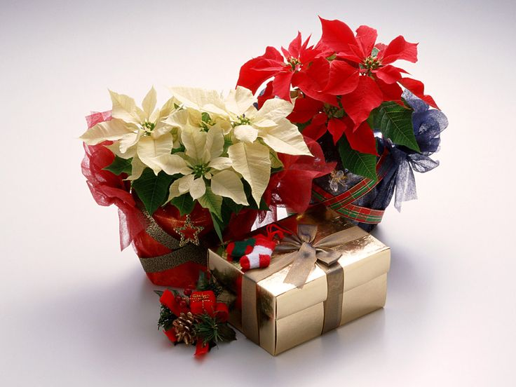 Would you love this beautiful gift for #Christmas? #flowers #ChristmasGifts #ChristmasSurprises  flora2000.com