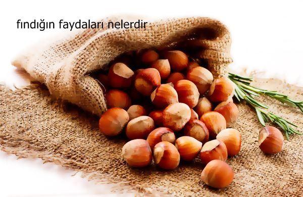 Ülkemizin en büyük zenginliklerinden birisi olan fındık Karadeniz Bölgesi'nde bolca yetişir. Fındık birçok açıdan faydalı bir meyvedir. Fındık her şeyden önce bir enerji kaynağıdır. Sağlıklı bir yaşam için günde bir avuç kadar fındık yenmesi gerekir. Fındık Huşgiller familyasından bir ağaçtır.   #fındık