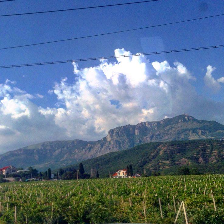 Vineyards виноградники в Крыму Крым красиво облака природа