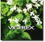 yin yang huo vicerex