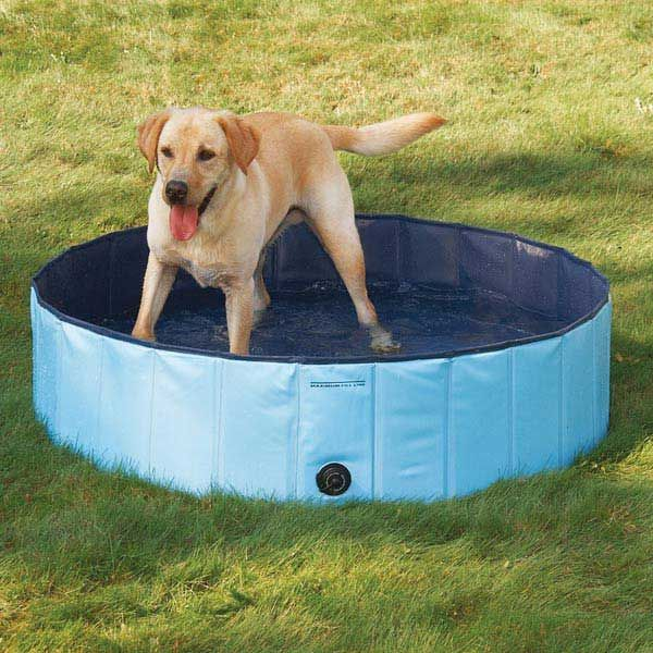 25 Best Ideas About Dog Swimming Pools On Pinterest Diy