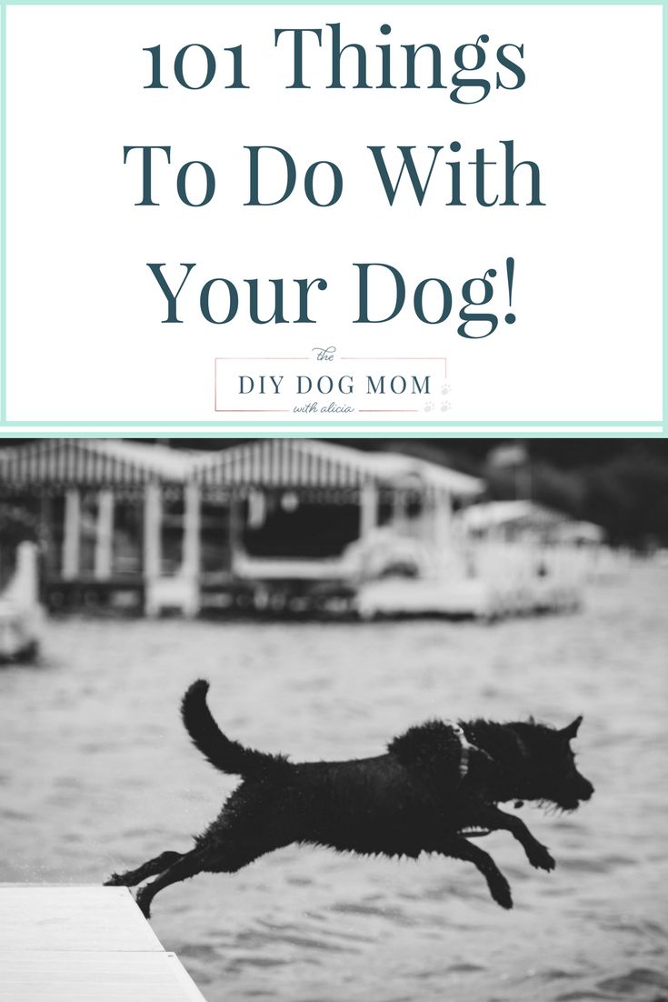 101 things to do with your dog! games for dogs, travel with dogs, toys for dogs