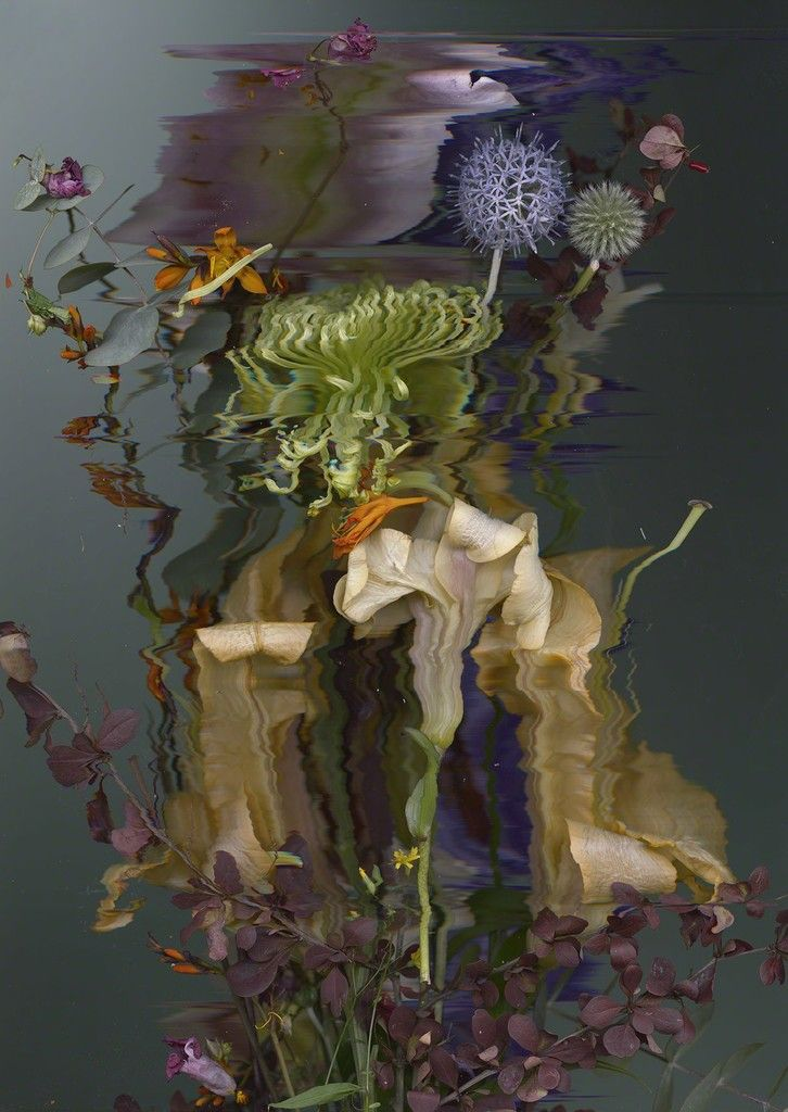 Sandra Kantanen, Distortion 8, 2016, Purdy Hicks Gallery