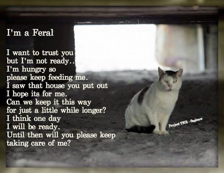 Make My Own Animal Trap For Feral Cats