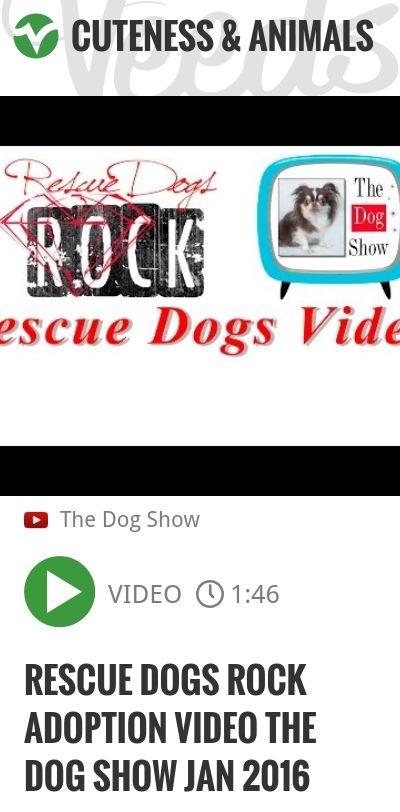 Rescue Dogs Rock Adoption Video The Dog Show Jan 2016   http://veeds.com/i/MlPlA4SCmM7xwMjt/cuteness/