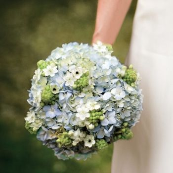 Summer bouquet of blue hydrangeas and green, star of Bethlehem blooms - Summer - Flowers Photos