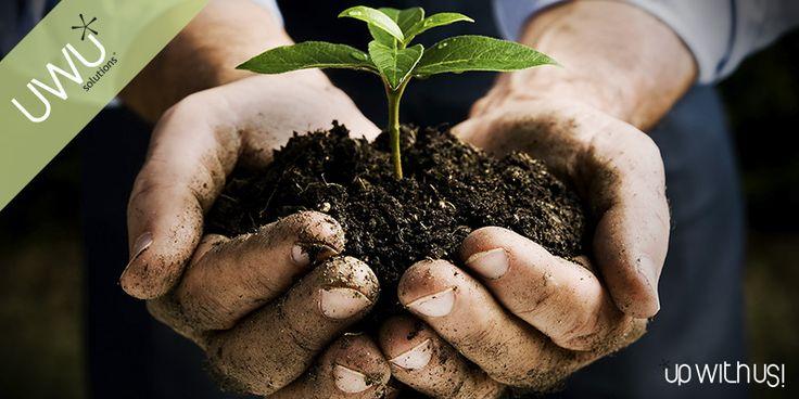 Sociedades de Gestão Florestal – Já conhece os benefícios fiscais aplicáveis? - http://bit.ly/2fY0RhI