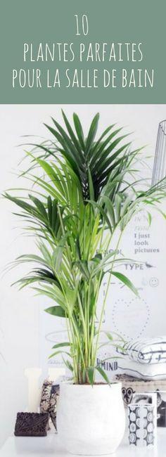 Déco : 10 plantes parfaites pour la salle de bain ! #déco #salledebain #plantes