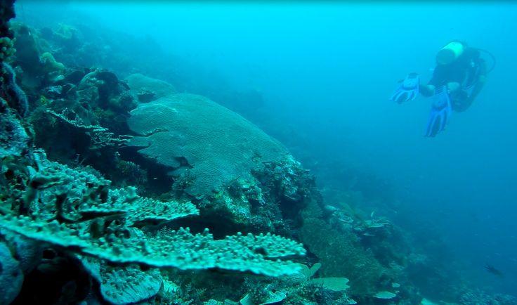 Ini Alasan Kamu Tak Perlu Takut Mencoba Scuba Diving | Ada beragam alasan ketika seseorang ingin menjadi scuba diver.