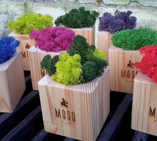 Cамые крутые ЭКО-сувениры из натурального дерева и стабилизированного мха с вашим логотипом от MOSS DECOR