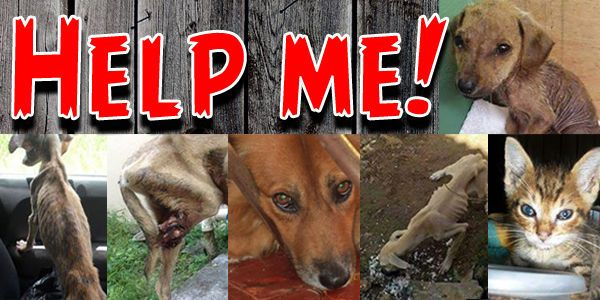 RESCUE PETS in JAMAICA from ABUSE and ABANDONMENT- end the animal terror!