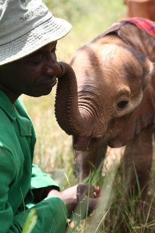 At The David Sheldrick Wildlife Trust, the bonds between the keepers and baby elephants are so important to their development. This is Jackson with Kinango.
