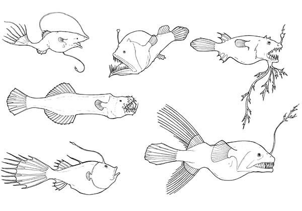 Deep Sea Fish Coloring Pages Fish Coloring Page Deep Sea Creatures Angler Fish Drawing